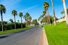 Улица выровнянная с пальмами и травой Стоковая Фотография RF