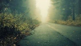 Улица в темном лесе с milky туманом и тенями Стоковая Фотография RF