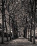 Улица дерева Стоковая Фотография RF