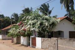 Улица деревни в Шри-Ланке Стоковые Изображения