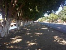 Улица деревьев Стоковое Фото