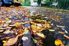 улица листьев осени Стоковые Изображения RF