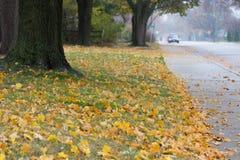 Улица осени пригородная предусматриванная в листьях стоковые изображения