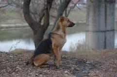 улица собаки рассеянная Стоковые Фото