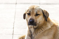 улица собаки рассеянная Стоковое Фото