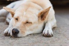 улица спать собаки Стоковые Изображения RF