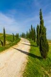 Улица среди кипарисов в dOrcia Тосканы-Val, Италии стоковое изображение