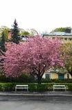 Улица с деревом и стендами Стоковые Изображения RF