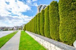 Улица с загородкой изгороди Стоковые Фото