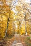 Улица с листвой Стоковые Изображения RF