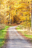 Улица с листвой Стоковая Фотография