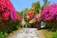 Улица цветений Стоковые Изображения