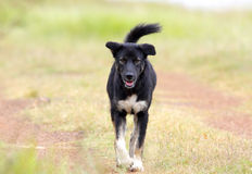 улица черной собаки Стоковая Фотография RF