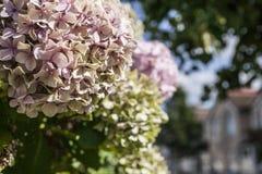 Улицы Лондона, желтых и розовых цветков Стоковая Фотография