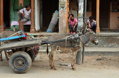 Улиц-жизнь с ослом и тележкой, Nawalgarh, раджами стоковая фотография