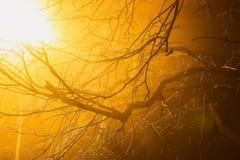 уличный свет ночи в тумане дерева Стоковое фото RF