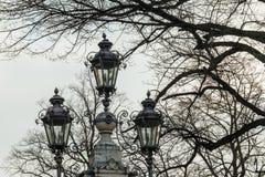 Уличный фонарь и ветви дерева Стоковые Фотографии RF