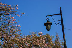 Уличный фонарь и цветки в Антигуе, Гватемале Стоковые Фото