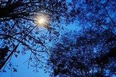 Уличный фонарь на сумраке Стоковое Фото
