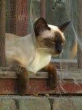 Удобный кот в окне Стоковое Фото