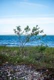 Удобный пляж Балтийского моря с утесами и зеленым vegetat Стоковое Фото