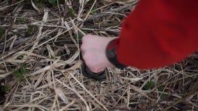 Уловите змейку избежание змейки человек пробует уловить змейку кабелем но она бежит прочь, избежание красивейшая змейка видеоматериал