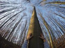 Уловите древесину! стоковые фото