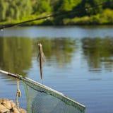 Уловленные рыбы как раз принятые от воды на удя линии сверх на сеть посадки против естественной предпосылки с внешней водой Стоковая Фотография