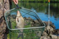 Уловленные рыбы на удя линии в рыболове руки сверх на сети посадки против предпосылки с внешней водой concepts Стоковое Изображение