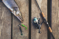 Уловленный от пресноводных больших рыб - щуки, лежа около закручивать на деревянный мост Стоковые Изображения
