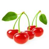 Улучшите сладостные вишни при лист изолированные на белой предпосылке Стоковые Изображения
