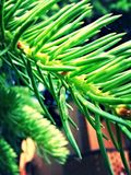 Улучшите campuflaged Стоковое фото RF