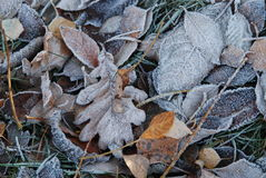 Улыбка лист осени Стоковое Изображение RF