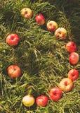 Улыбка от яблок на траве Стоковая Фотография RF