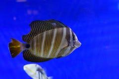 Улыбка рыб Стоковые Фотографии RF
