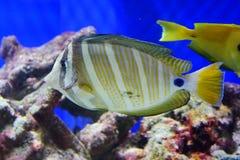 Улыбка рыб Стоковая Фотография