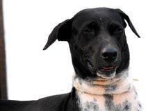 Улыбка черной собаки Стоковое Изображение RF
