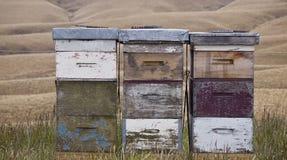 Ульи, Otago, Новая Зеландия Стоковые Изображения RF
