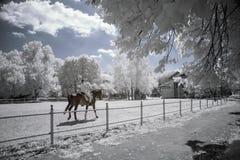Ультракрасный ландшафт Стоковые Фото
