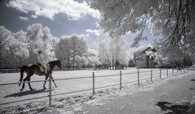 Ультракрасный парк Стоковое Изображение RF
