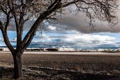 Ультракрасный портрет контраста красивого дерева Стоковое Изображение RF