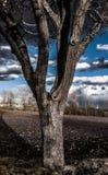 Ультракрасный портрет контраста красивого дерева Стоковое Фото