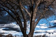 Ультракрасный портрет контраста красивого дерева Стоковые Фотографии RF