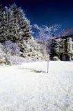Ультракрасный сад Стоковое фото RF