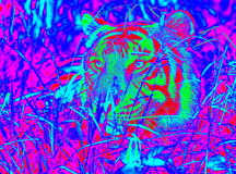 Ультракрасный тигр Стоковое Изображение