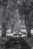Ультракрасный черно-белый ландшафт Стоковое Фото