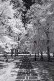 Ультракрасный черно-белый ландшафт Стоковое фото RF