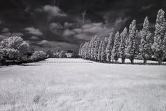 Ультракрасный черно-белый ландшафт Стоковая Фотография RF