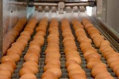 Фабрика яйца на выбирать процесс и сортировать производственную линию стоковое фото
