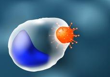 Фагоцитоз лейкоцит и вирус иллюстрация вектора